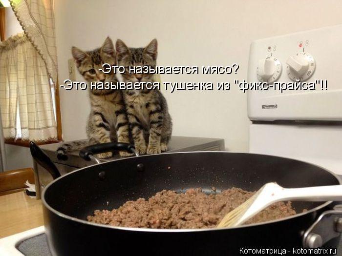 """Котоматрица: -Это называется мясо? -Это называется тушенка из """"фикс-прайса""""!!"""