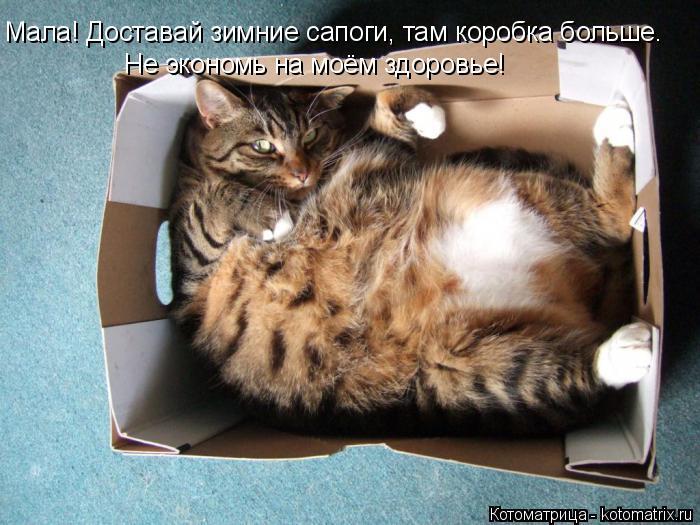 Котоматрица: Мала! Доставай зимние сапоги, там коробка больше. Не экономь на моём здоровье!
