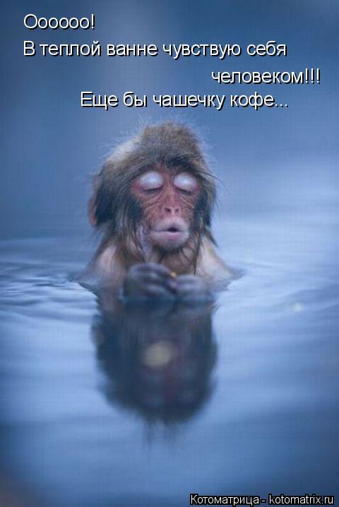 Котоматрица: Оооооо! В теплой ванне чувствую себя человеком!!! Еще бы чашечку кофе...