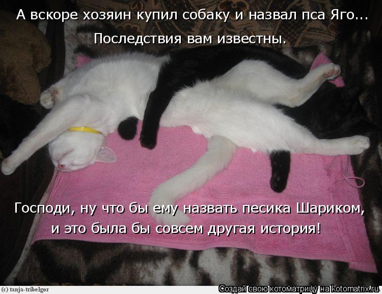 Котоматрица: Последствия вам известны. А вскоре хозяин купил собаку и назвал пса Яго... Господи, ну что бы ему назвать песика Шариком, и это была бы совсем