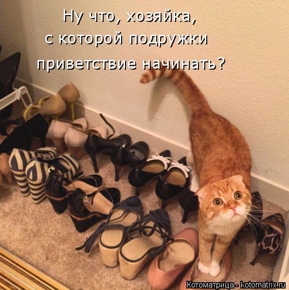 Котоматрица: Ну что, хозяйка,  с которой подружки приветствие начинать?