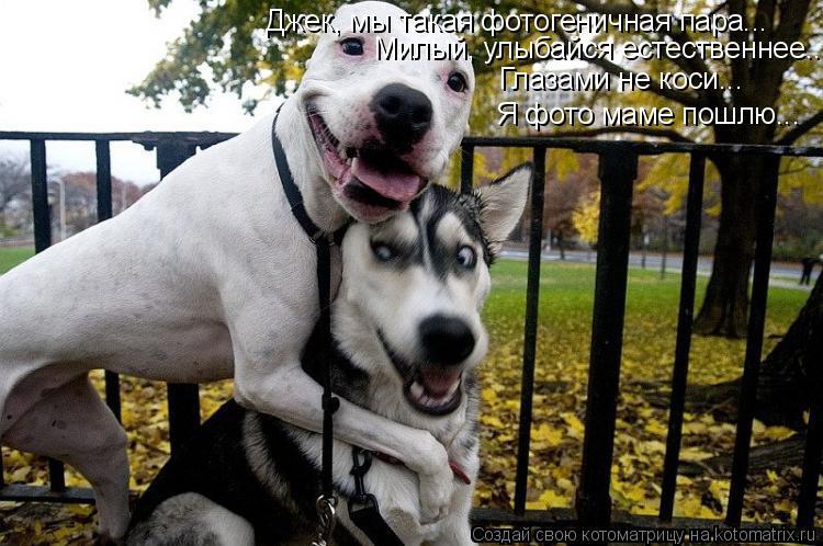 Котоматрица: Джек, мы такая фотогеничная пара... Милый, улыбайся естественнее.... Глазами не коси... Я фото маме пошлю...