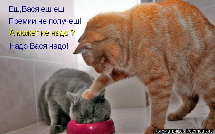Котоматрица: Еш,Вася еш еш Премии не получеш! А может не надо ? Надо Вася надо!