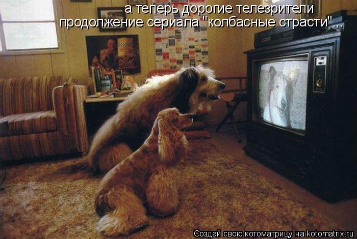 """Котоматрица: а теперь дорогие телезрители продолжение сериала """"колбасные страсти""""..."""