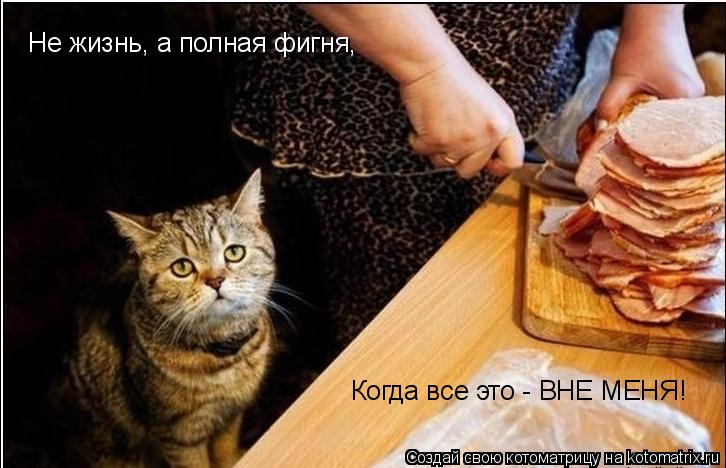 Котоматрица: Не жизнь, а полная фигня, Когда все это - ВНЕ МЕНЯ!