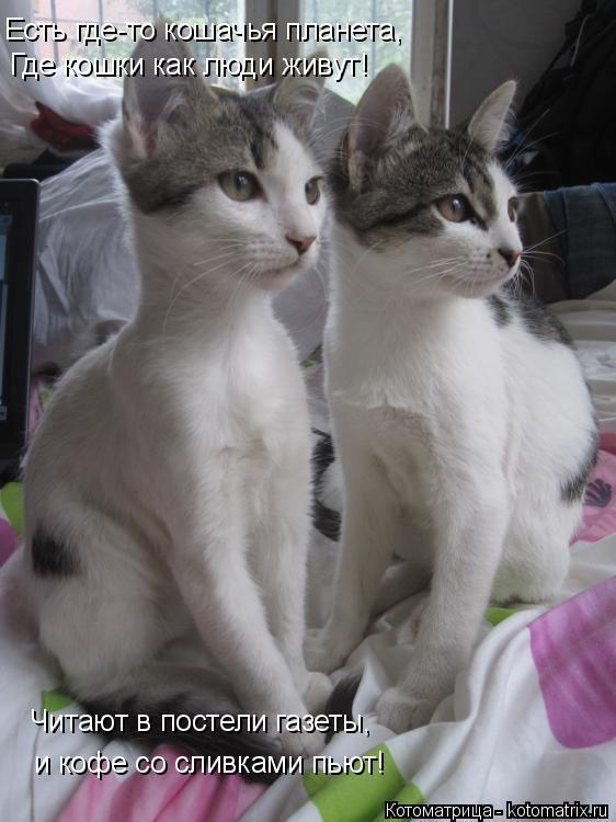 Котоматрица: Есть где-то кошачья планета, Где кошки как люди живут! Читают в постели газеты, и кофе со сливками пьют!