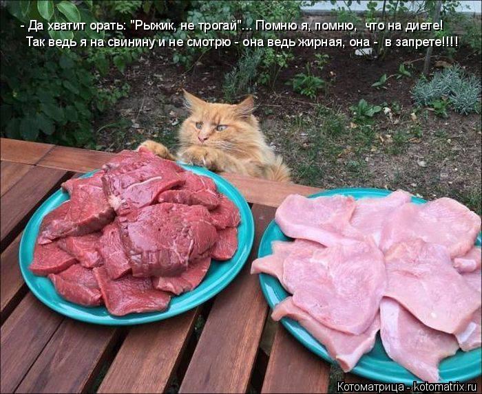 """Котоматрица: - Да хватит орать: """"Рыжик, не трогай""""... Помню я, помню,  что на диете! Так ведь я на свинину и не смотрю - она ведь жирная, она -  в запрете!!!!"""