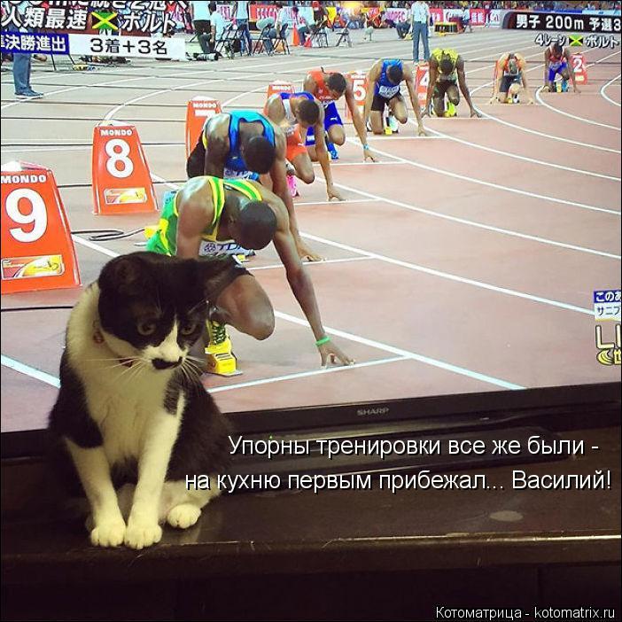 Котоматрица: Упорны тренировки все же были - на кухню первым прибежал... Василий!