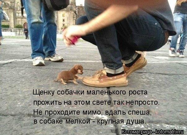 Котоматрица: Щенку собачки маленького роста прожить на этом свете так непросто. Не проходите мимо, вдаль спеша, в собаке мелкой - крупная душа.