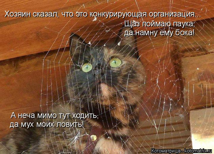 Котоматрица: Хозяин сказал, что это конкурирующая организация... Щаз поймаю паука,  да намну ему бока! А неча мимо тут ходить,  да мух моих ловить!