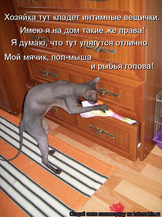 Котоматрица: Хозяйка тут кладет интимные вещички. Имею я на дом такие же права! Я думаю, что тут улягутся отлично Мой мячик, пол-мыша и рыбья голова!