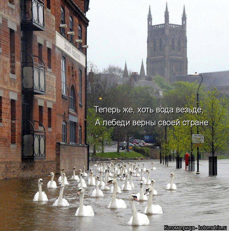 Котоматрица: А лебеди верны своей стране Теперь же, хоть вода везьде,
