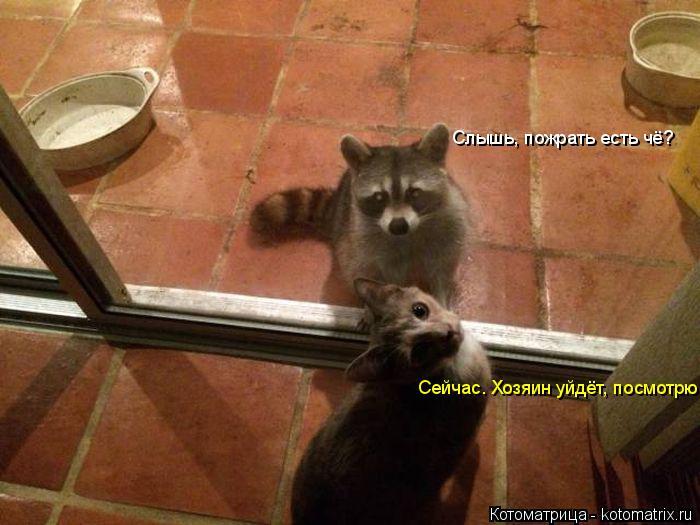 Котоматрица: Слышь, пожрать есть чё? Сейчас. Хозяин уйдёт, посмотрю.