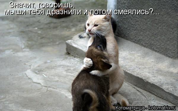 Котоматрица: Значит, говоришь,  мыши тебя дразнили и потом смеялись?...