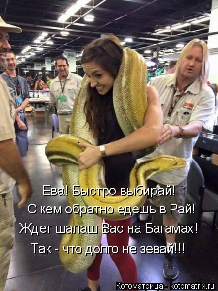 Котоматрица: Ева! Быстро выбирай! С кем обратно едешь в Рай! Ждет шалаш Вас на Багамах! Так - что долго не зевай!!!