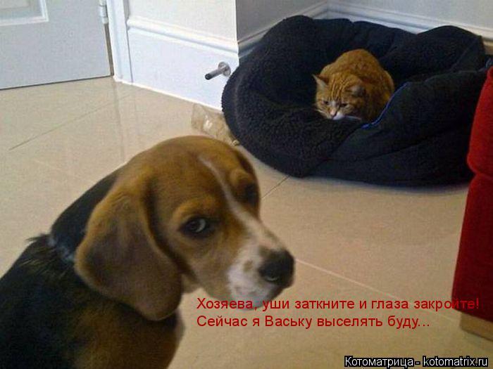 Котоматрица: Хозяева, уши заткните и глаза закройте!  Сейчас я Ваську выселять буду...