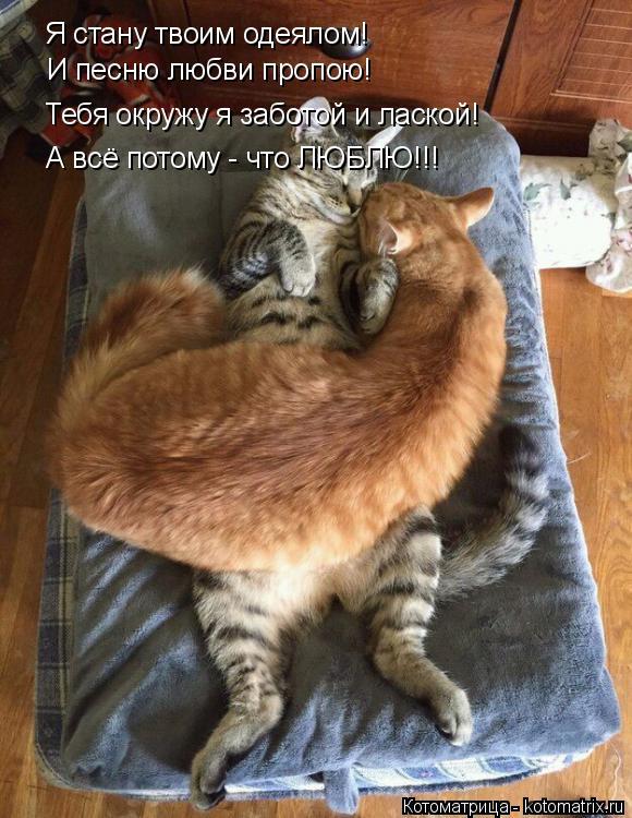 Котоматрица: Я стану твоим одеялом! И песню любви пропою! Тебя окружу я заботой и лаской! А всё потому - что ЛЮБЛЮ!!!
