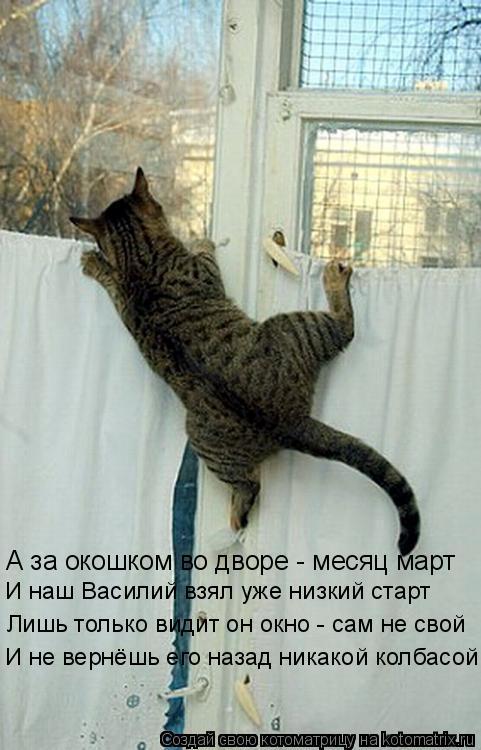 Котоматрица: А за окошком во дворе - месяц март И наш Василий взял уже низкий старт Лишь только видит он окно - сам не свой И не вернёшь его назад никакой к