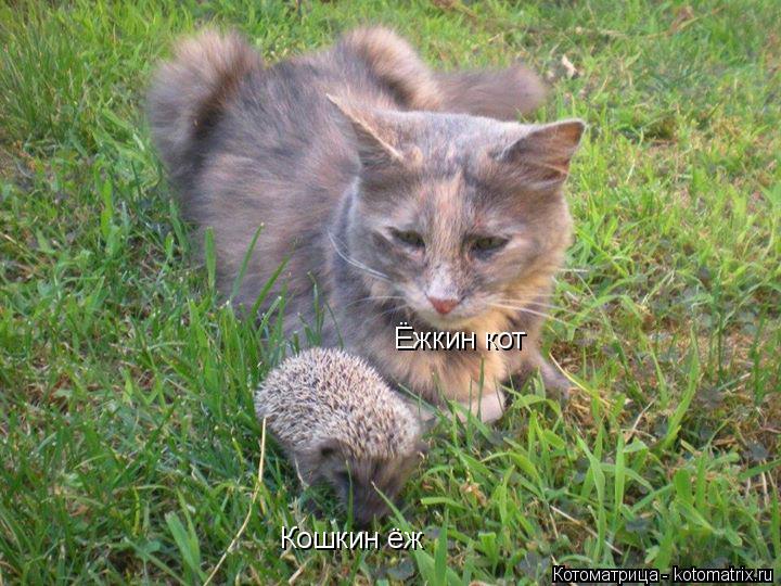 Котоматрица: Ёжкин кот Кошкин ёж