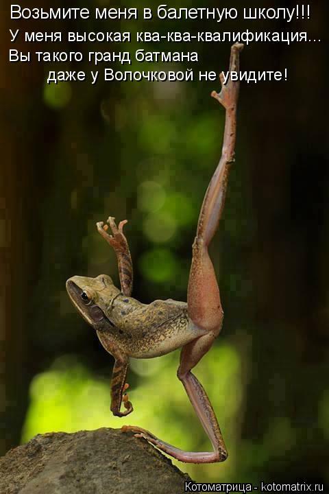 Котоматрица: Возьмите меня в балетную школу!!! У меня высокая ква-ква-квалификация... Вы такого гранд батмана даже у Волочковой не увидите!