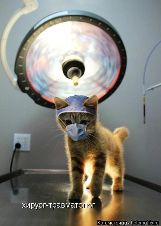 Котоматрица: хирург-травматолог