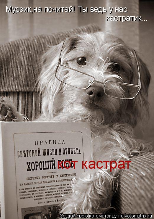 Котоматрица: кот кастрат Мурзик,на почитай! Ты ведь у нас  кастратик...