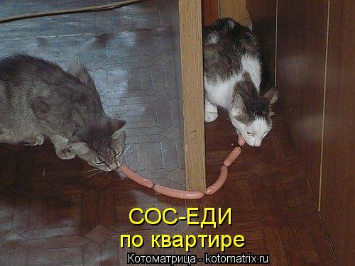 Котоматрица: СОС-ЕДИ по квартире
