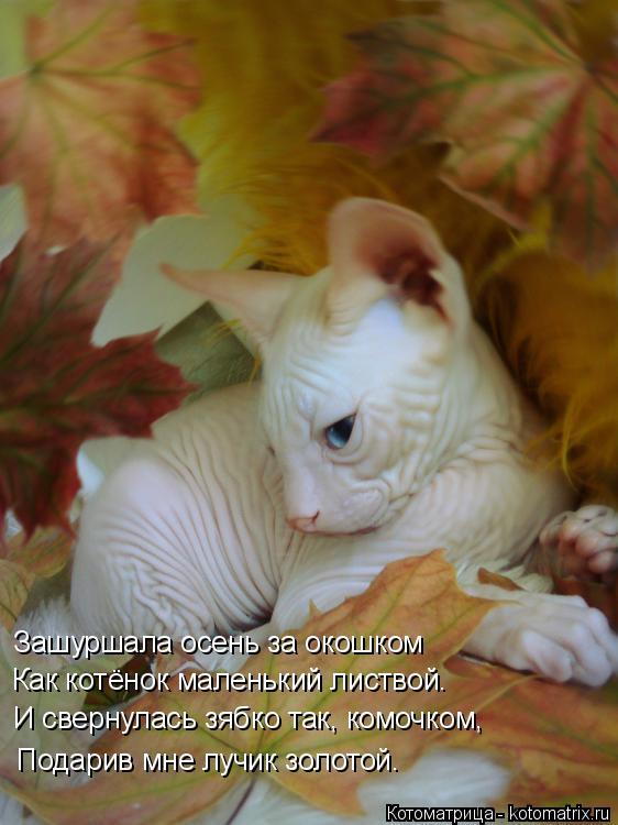 Котоматрица: Зашуршала осень за окошком Как котёнок маленький листвой. И свернулась зябко так, комочком, Подарив мне лучик золотой.