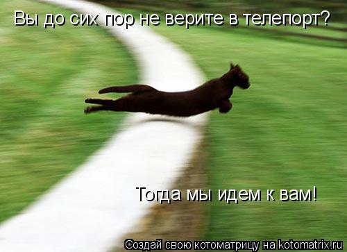 Котоматрица: Вы до сих пор не верите в телепорт? Тогда мы идем к вам!