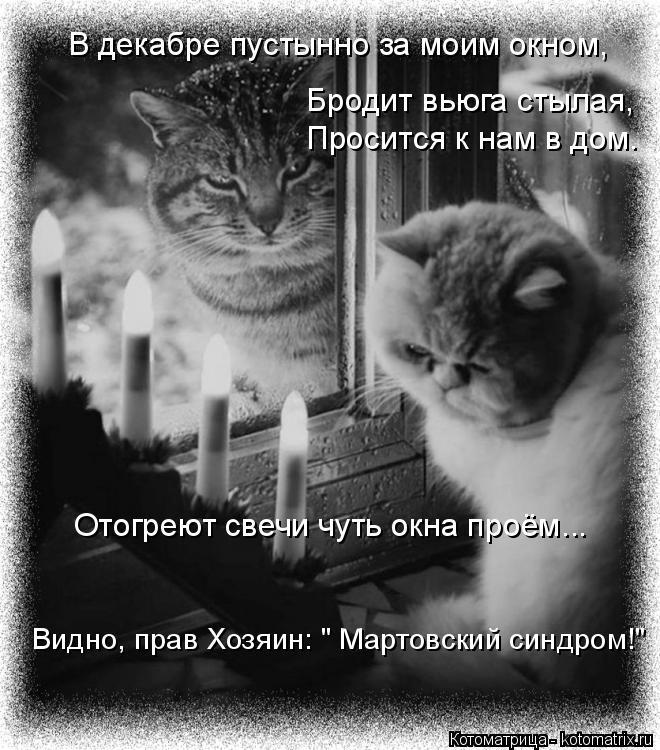 """Котоматрица: В декабре пустынно за моим окном, Бродит вьюга стылая, Просится к нам в дом. Отогреют свечи чуть окна проём... Видно, прав Хозяин: """" Мартовский"""