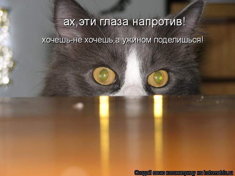 Котоматрица: ах,эти глаза напротив! хочешь-не хочешь,а ужином поделишься!