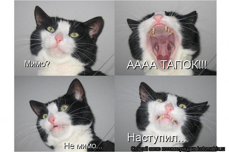 Как сделать что бы кот не хотел кошку 26