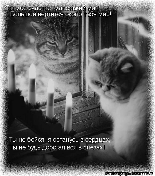 Котоматрица: Ты мое счастье, маленький миг! Большой вертится около тебя мир! Ты не бойся, я останусь в сердцах, Ты не будь дорогая вся в слезах!