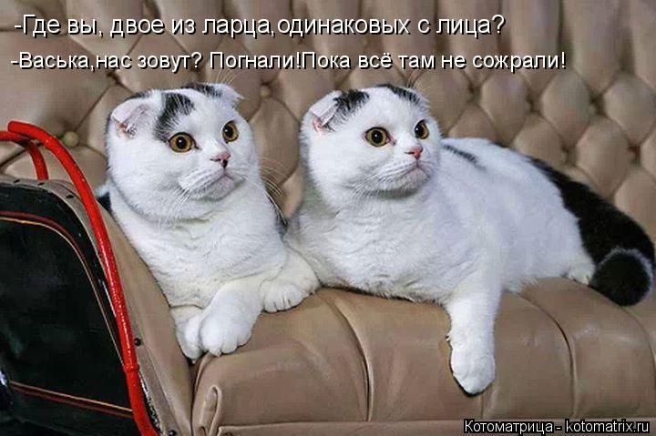 Котоматрица: -Васька,нас зовут? Погнали!Пока всё там не сожрали! -Где вы, двое из ларца,одинаковых с лица?