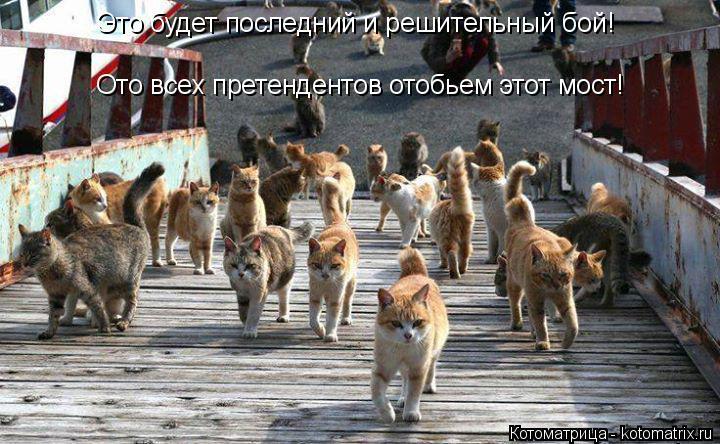 Котоматрица: Это будет последний и решительный бой! Ото всех претендентов отобьем этот мост!
