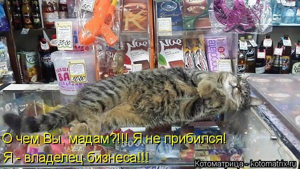 Котоматрица: О чем Вы, мадам?!!! Я не прибился! Я - владелец бизнеса!!!