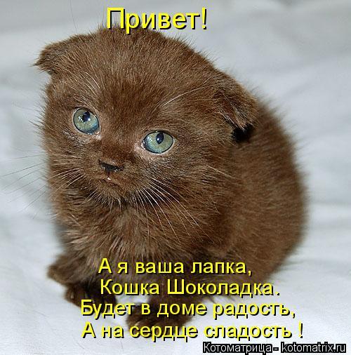 Котоматрица: Привет! А я ваша лапка, Кошка Шоколадка. Будет в доме радость, А на сердце сладость !
