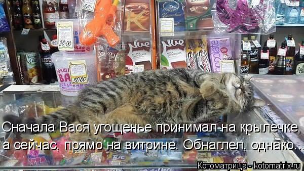 Котоматрица: Сначала Вася угощенье принимал на крылечке, а сейчас, прямо на витрине. Обнаглел, однако...