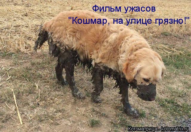 "Котоматрица: Фильм ужасов ""Кошмар, на улице грязно!"""