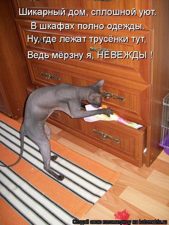 Котоматрица: Шикарный дом, сплошной уют. В шкафах полно одежды. Ну, где лежат трусёнки тут, Ведь мёрзну я, НЕВЕЖДЫ !