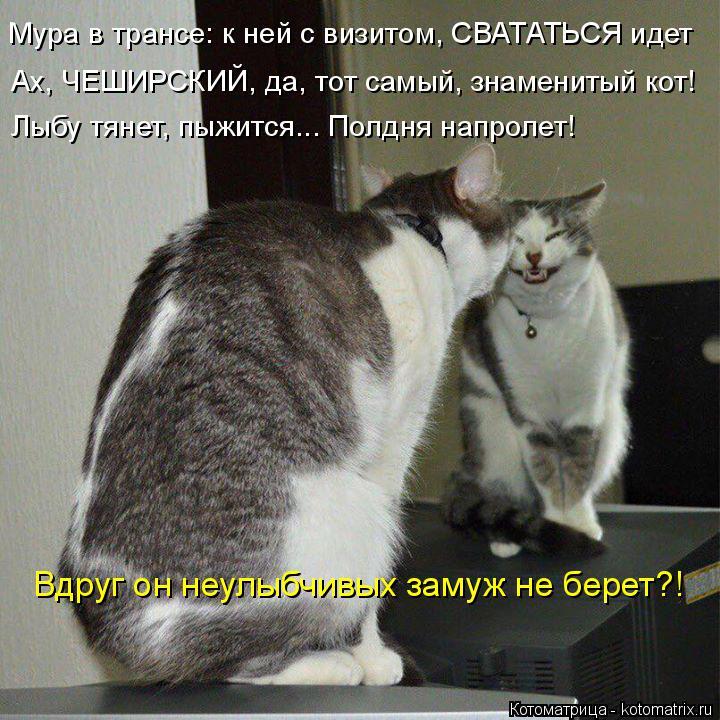 Котоматрица: Мура в трансе: к ней с визитом, СВАТАТЬСЯ идет Ах, ЧЕШИРСКИЙ, да, тот самый, знаменитый кот! Лыбу тянет, пыжится... Полдня напролет! Вдруг он неу