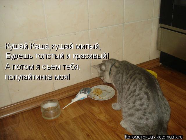 Котоматрица: Кушай,Кеша,кушай милый, Будешь толстый и красивый! А потом я съем тебя, попугайтинка моя!