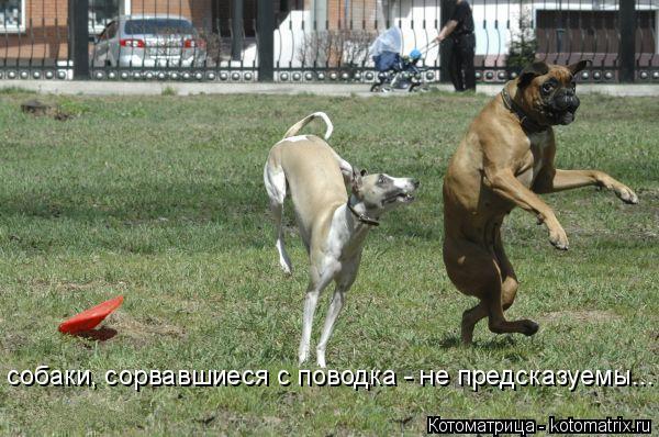 Котоматрица: собаки, сорвавшиеся с поводка - не предсказуемы...