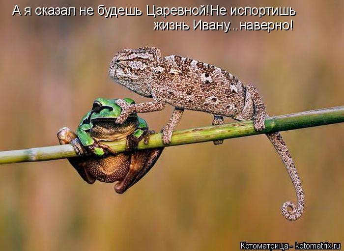 Котоматрица: А я сказал не будешь Царевной!Не испортишь жизнь Ивану...наверно!
