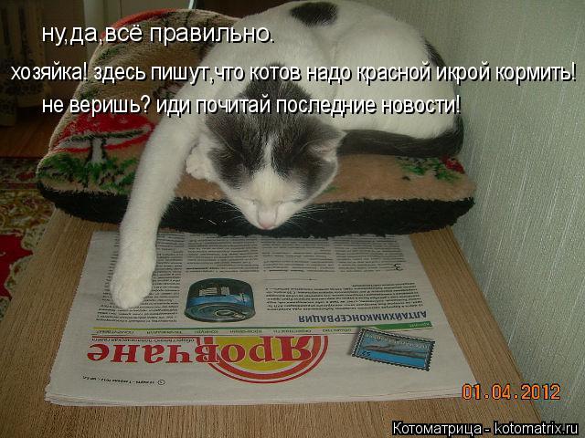 Котоматрица: ну,да,всё правильно. хозяйка! здесь пишут,что котов надо красной икрой кормить! не веришь? иди почитай последние новости!
