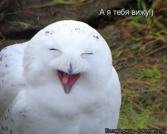 Котоматрица: А я тебя вижу!)