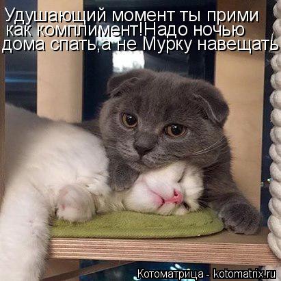 Котоматрица: Удушающий момент ты прими как комплимент!Надо ночью дома спать,а не Мурку навещать!