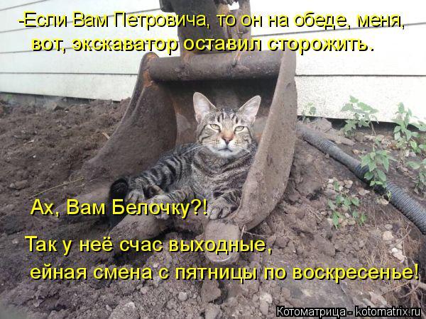 Котоматрица: -Если Вам Петровича, то он на обеде, меня, вот, экскаватор оставил сторожить. Ах, Вам Белочку?!  Так у неё счас выходные, ейная смена с пятницы п