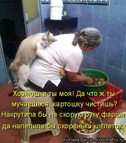 Котоматрица: Хозяюшка ты моя! Да что ж ты  мучаешься, картошку чистишь? Накрутила бы на скорую руку фарша да налепила бы скоренько котлеток.