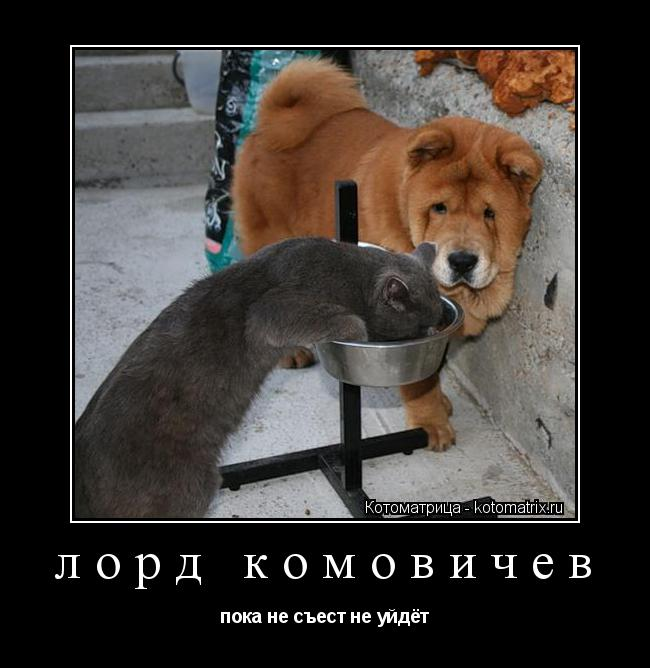 Котоматрица: лорд комовичев пока не съест не уйдёт